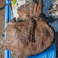Tìm thấy giỏ trái cây nguyên vẹn từ thế kỷ 4 TCN ở thành phố cổ bị chìm của Ai Cập