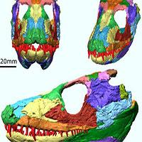 """Tái tạo """"quái vật"""" có chân đầu tiên, 340 triệu tuổi: Kết quả kinh hoàng"""