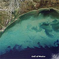 """Biển """"địa ngục"""" đang lan rộng ở Mỹ, sinh vật bơi vào là chết"""