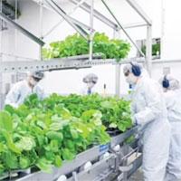 """Hai nhà khoa học """"trồng phân tử"""" để chế vaccine Covid-19 từ thực vật"""