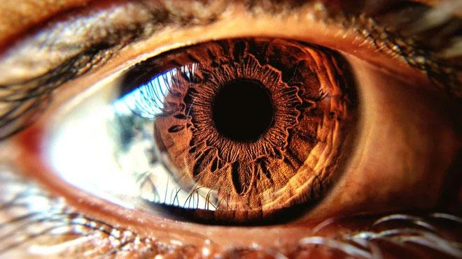Kích thước đồng tử được điều chỉnh bởi hai cơ rất nhỏ đối nhau bên trong mắt