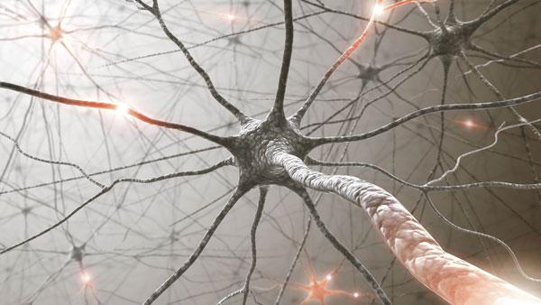 Một nơ ron thần kinh trong não bộ con người phức tạp hơn rất nhiều so với một node của deep neural network trong các hệ thống deep learning