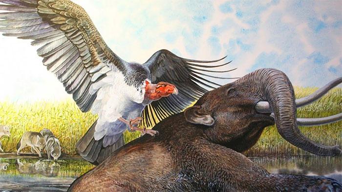 Hình ảnh phục dựng chim Teratorns
