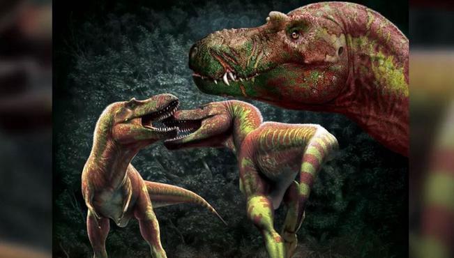 Trong những cuộc ẩu đả hoặc chiến đấu, khủng long bạo chúa thường cắn vào mặt đối phương.