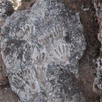 """Nhóm khảo cổ tìm thấy """"tác phẩm nghệ thuật"""" cổ xưa nhất lịch sử loài người"""