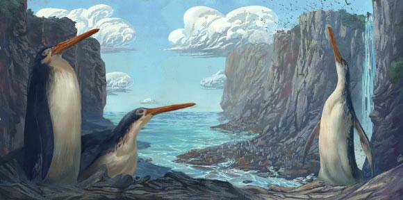 Loài chim cánh cụt khổng lồ được đặt tên là Kairuku waewaeroa.