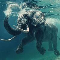 Những khám phá cực hay ho về loài voi khổng lồ