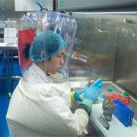 Các nhà khoa học Vũ Hán từng có ý định thả virus Corona biến đổi vào hang dơi