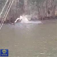 """Video: Cá mập đi vào lãnh địa cá sấu kiếm ăn và kết cục """"một đi không trở lại"""""""
