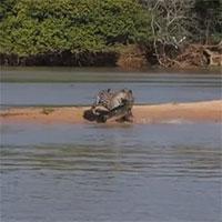 Thản nhiên nằm phơi nắng, cá sấu trả giá bằng mạng sống vì thiếu cảnh giác