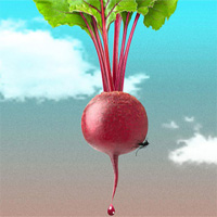Giải pháp diệt muỗi gây bệnh bằng củ cải ngọt