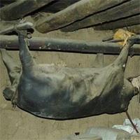 Kinh dị đặc sản lợn nguyên con treo trên trần nhà 30 năm và bốc mùi hôi thối
