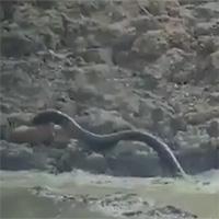 """Video: """"Vòi đen"""" khổng lồ bất ngờ vọt lên từ dưới nước, đoạt mạng linh dương trong chớp mắt"""