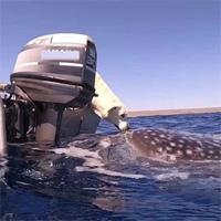 """Khoảnh khắc ấn tượng khi chó """"hôn"""" cá mập khổng lồ"""
