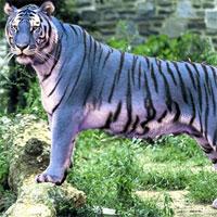 Bí ẩn loài hổ xanh tuyệt đẹp gây xôn xao Trung Quốc