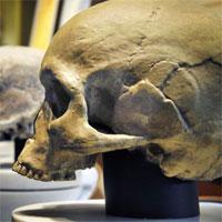 Nghiên cứu gây sốc cho thấy: 3.000 năm trước, não loài người bị thu nhỏ lại