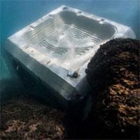 """Bê tôngtăng độ bền khi """"nuôi""""sinh vật biển"""