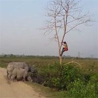 Video: Bị tê giác truy đuổi, người đàn ông sợ hãi trèo lên cây